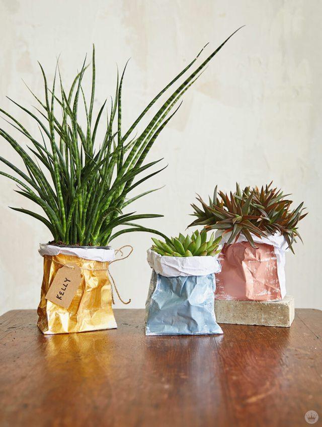 Trois plantes dans les sacs de bricolage en papier | thinkmakeshareblog.com
