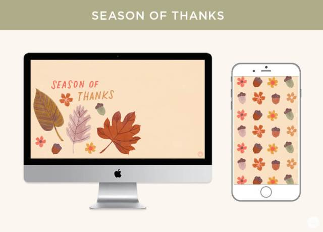 "FREE November 2019 digital wallpapers: Fall leaves with lettering that reads ""SEASON OF THANKS"" on a monitor and iPhone."