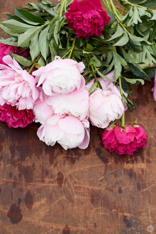 Freshly picked peonies still wet from the rain.