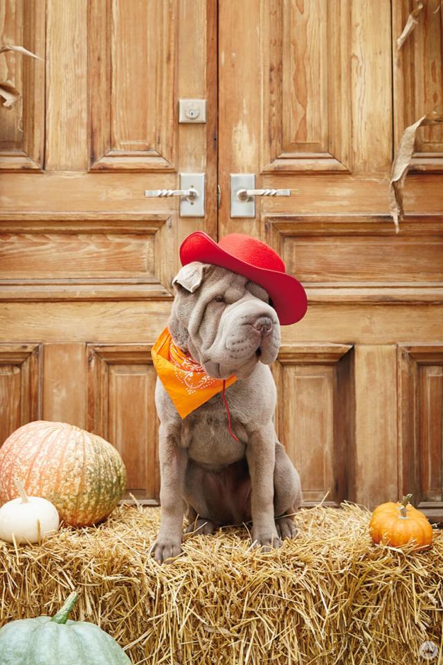 Doggy cowpoke