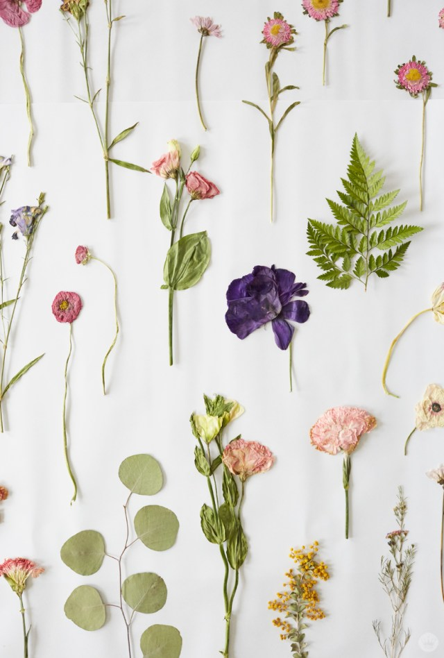 Pressed Flower Ideas From A Hallmark Workshop Thinkkeare