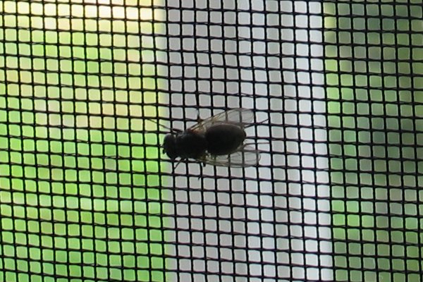 A Fly On The Screen Analogy For Reaching A Goal
