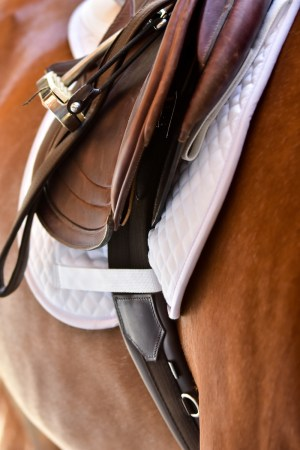 ThinLine English Jumping Comfort Girth Lifestyle