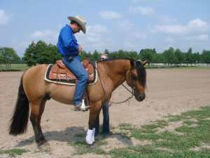Western horse boot sport medicine