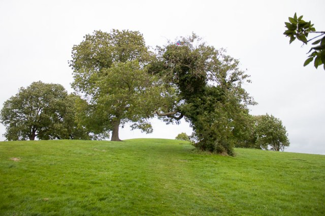 Fairy Tree - Navan Fort