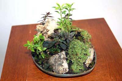 mini-forest8