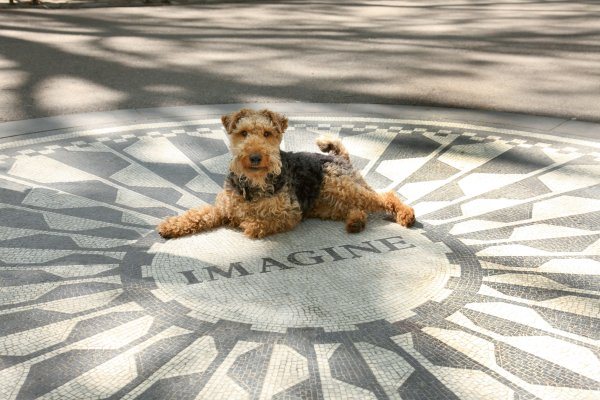 Central Park Goes to the Dogs