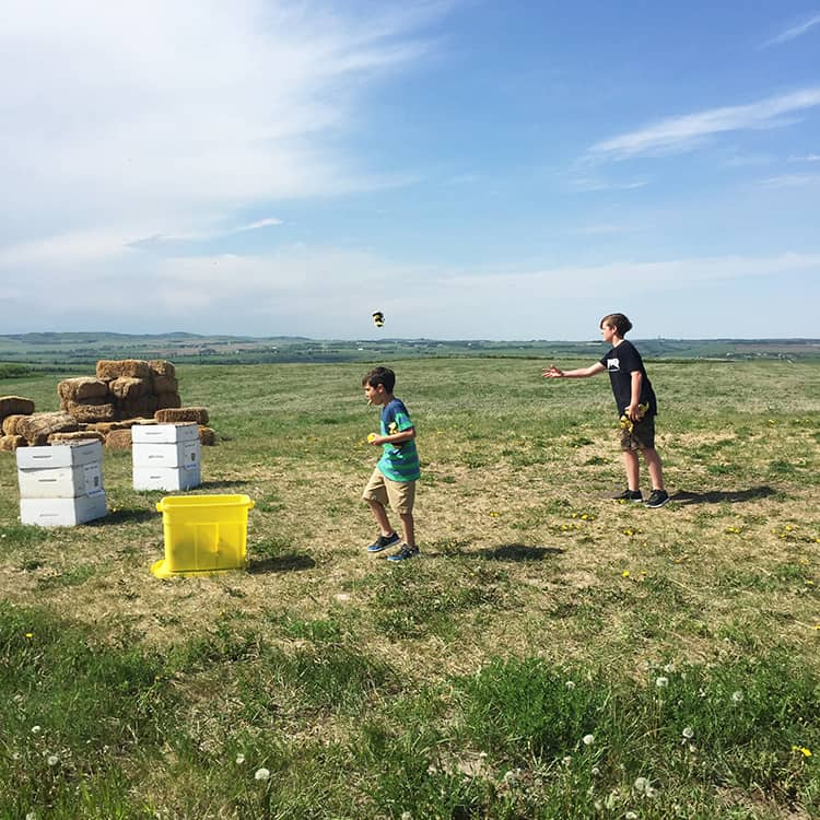 Visit and Picnic: Chinook Honey Farm