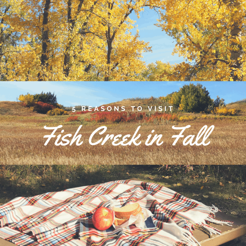 5 Reasons to Visit Fish Creek Provincial Park in Fall
