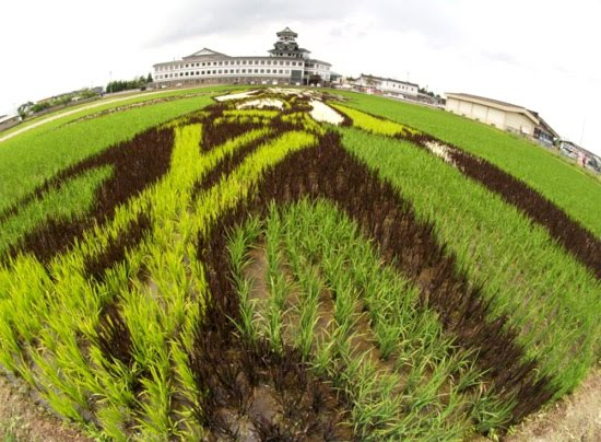 art-at-rice-field