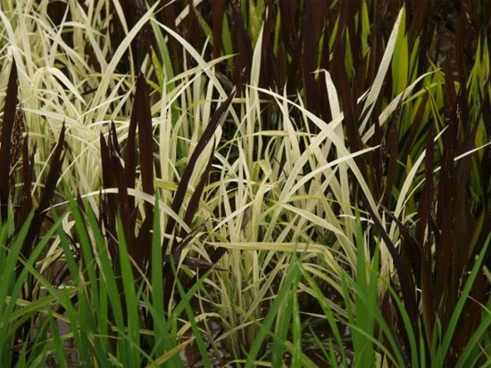 rice-field-close-up-4
