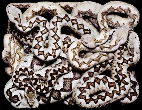 white-and-black-snake
