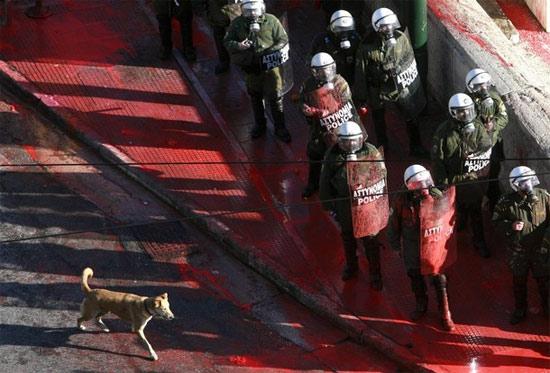 dog-riot