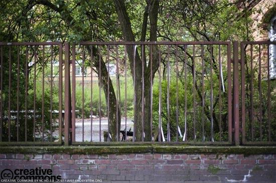 fence-street-art