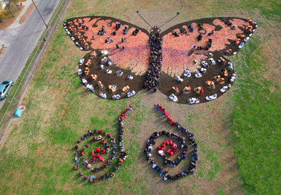 butterfly-sky-photo