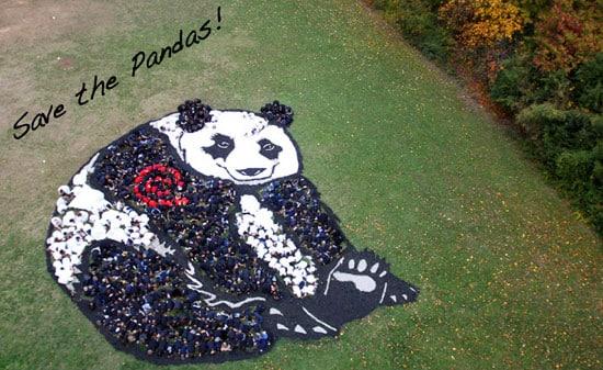 panda-sky-photo