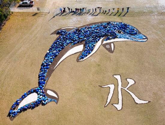 skyphoto-dolphin