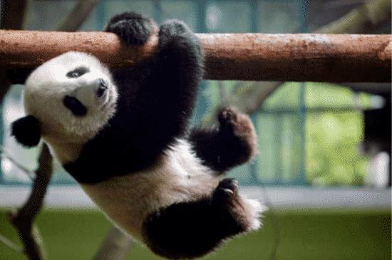 The Cute Panda and Cute Animals