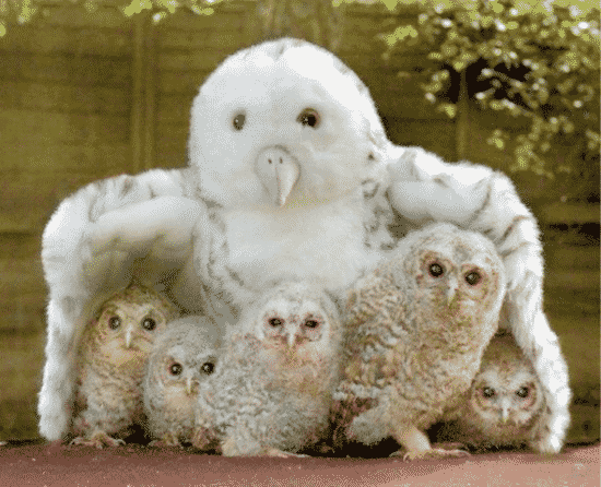 The Cute Owl and Cute Animals