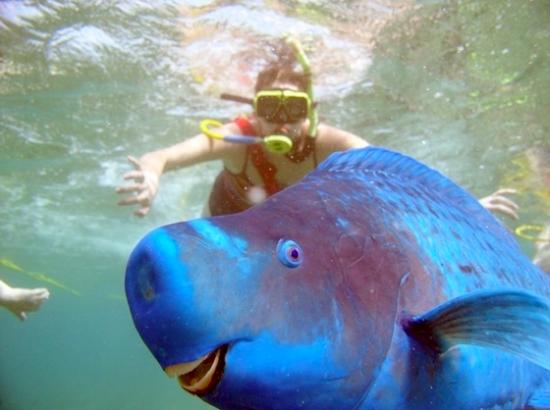 Best Underwater Photobomb