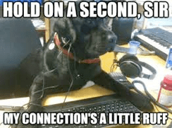 Cute Dog Meme