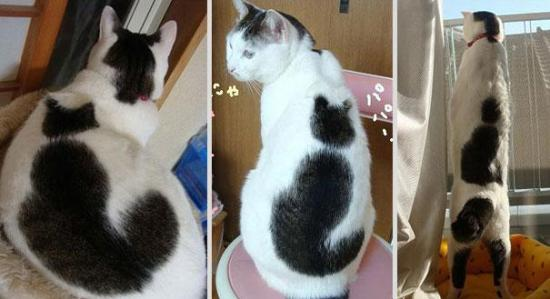 cat-markings-4-2