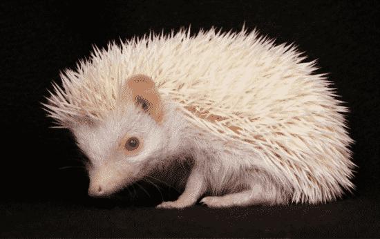 Aheadhog