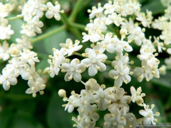 11 Best Edible Flowers from Your Garden11