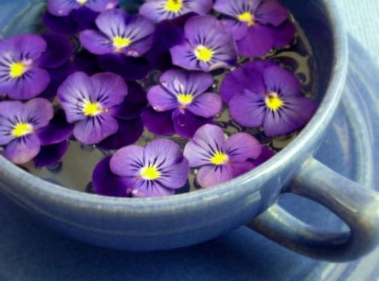 11 Best Edible Flowers from Your Garden2