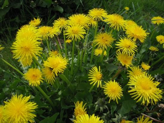 11 Best Edible Flowers from Your Garden5