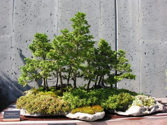 Bonsai 5