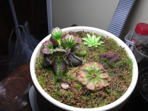 dormancy carnivorous plants apartment