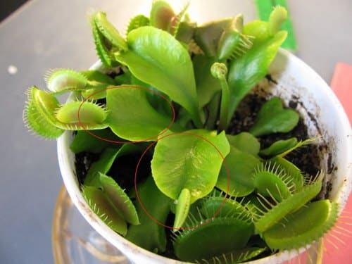 water carnivorous plants apartment