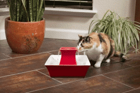 Stunning Gifts Every Cat Lover Wants to Have