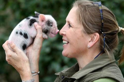 teacup pigs characteristics