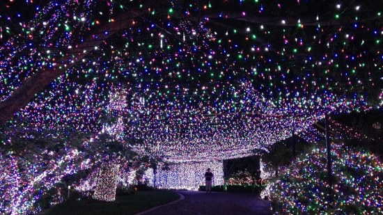 LED Christmas Lights half a million LED lights