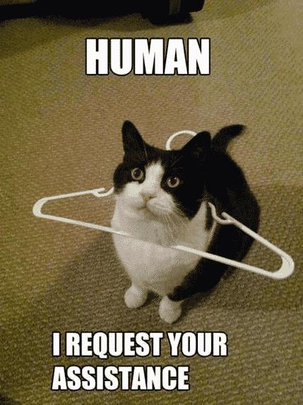 Funny Animal Memes