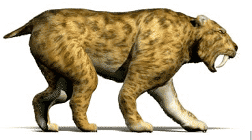 Extinct Animals and the Saber Toothed Cat