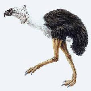terror-bird