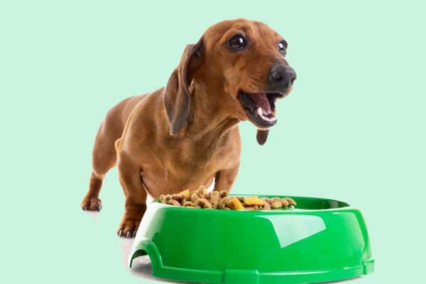Ball In Bowl - Amazing Hacks For Every Dog Owner
