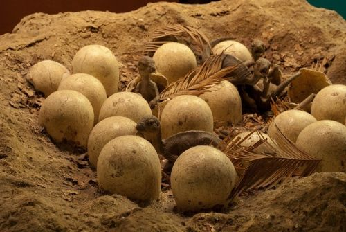 Laid Eggs - Amazing Facts About Dinosaurs