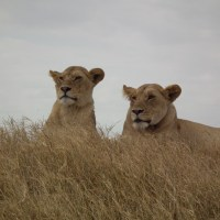 I Fell In Love With The Serengeti