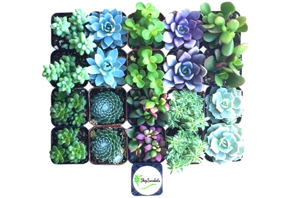 small gifts ideas for men succulent