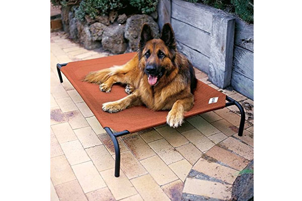 bed-mens-birthday-gifts-box-for-dog-lover