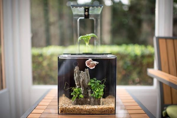 firefighter retirement gifts aquarium