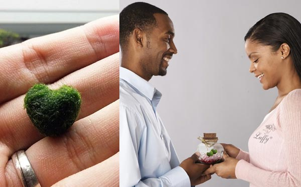 romantic birthday gifts for husband marimo
