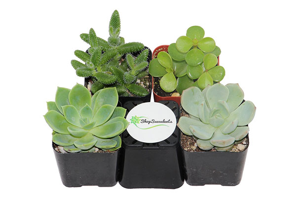 christmas gift ideas for coworkers succulant