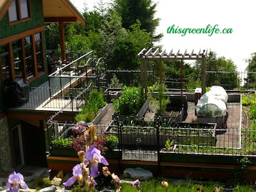 rooftop garden with wrought iron fence