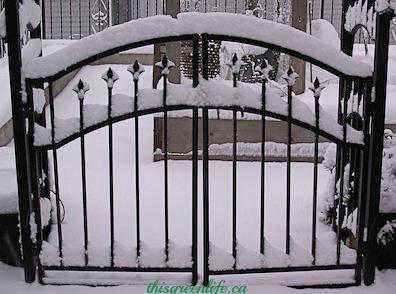 garden gate in snow