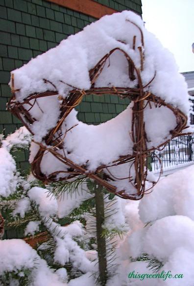 grapevine star in snow